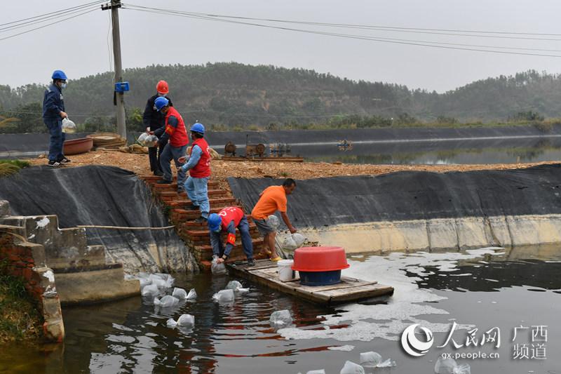"""广西钦州:养殖户放虾苗 """"红马甲""""助复产"""